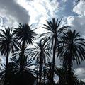 feu artifice de palmiers