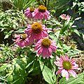 Floraisons de juillet 2012