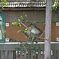 roumanie - certaines maisons sont recouvertes de mozaique