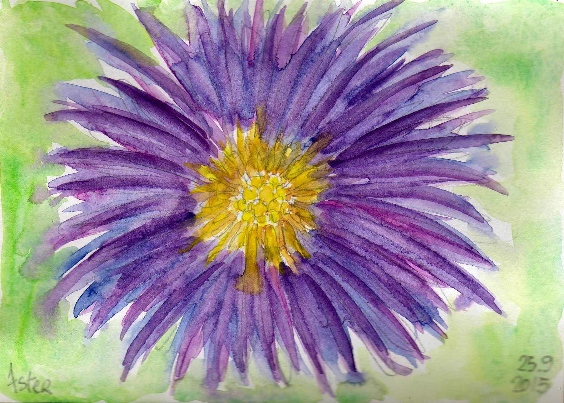 078_aster