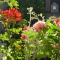 Toutes les roses, côté jardin