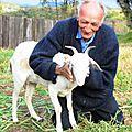 Brésil :Il décide de se marier avec une chèvre .