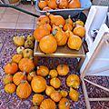 16 octobre - des légumes frais du potager....tout l'hiver malgré les gelées...