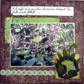 Les Everglades 11