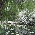 Au pays des thés et des pandas