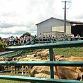 Visite de la Ferme de Longeville à Deux-Chaises...Quelques lignes, quelques photos...