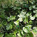 jardin botanique plante tropicale