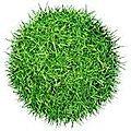 L'herbe est plus verte en maternelle