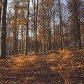 Forêt De Chabrières