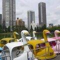 Voyage au japon - jour #20 - des pédalos-cygnes et des pastèques-cubes
