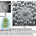 Terminale spécialité <b>SVT</b>, Chapitre 6 : L'organisation fonctionnelle des plantes à fleurs