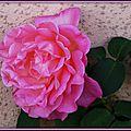 Rose 1809154
