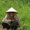 Album Vietnam