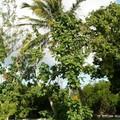 Palmiers et fleurs