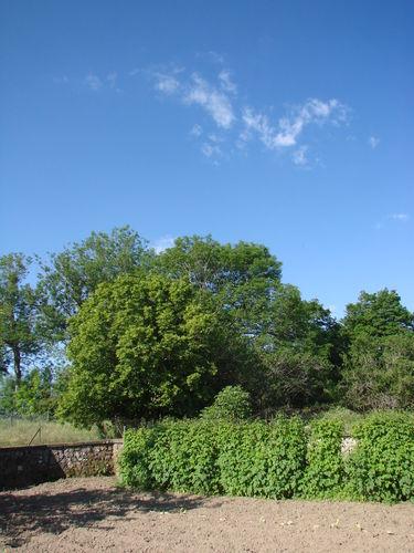 2008 06 23 Le jardin et le ciel bien bleu, quel contraste !