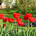 Plantations de <b>bulbes</b> de fleurs pour le printemps prochain