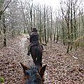 Balade à cheval dans la forêt P1080236