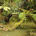 Bridal veil falls-ile du nord de la nouvelle-zélande