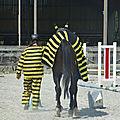 Jeux équestres manchots 2013 - balade