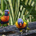 zoo-de-guyane