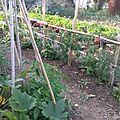 Courgettes, tomates,batavia,...