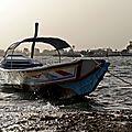 Sénégal (50)