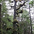 Ucluelet - Ile de Vancouver (2)