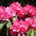 <b>Kew</b> <b>Gardens</b> - Fleurs et fruits en couleur