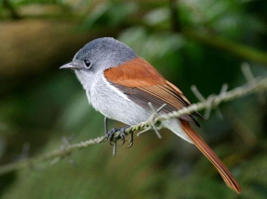 oiseau-vierge-240295