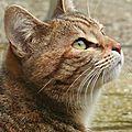 Illustration : la chatte de la voisine . . . + météo 0 ° ?????
