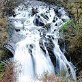 Strone Hill Woods - Trossachs (1)