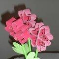 Fleurs en