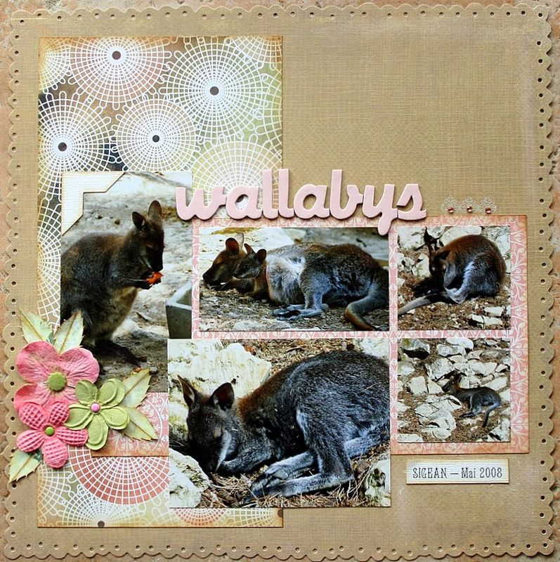 wallabys