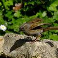 les oiseaux du jardin...en photo