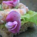 Canapés aux langoustines et aux fleurs de gesses