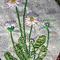 flowers flowers- paquerettes2