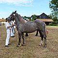 Concours élevage local - Bonningues les Ardres 2012