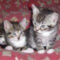 Timy et Mika