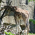 zoo + lincoln park (10)