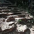 Les hortensias de la Véro