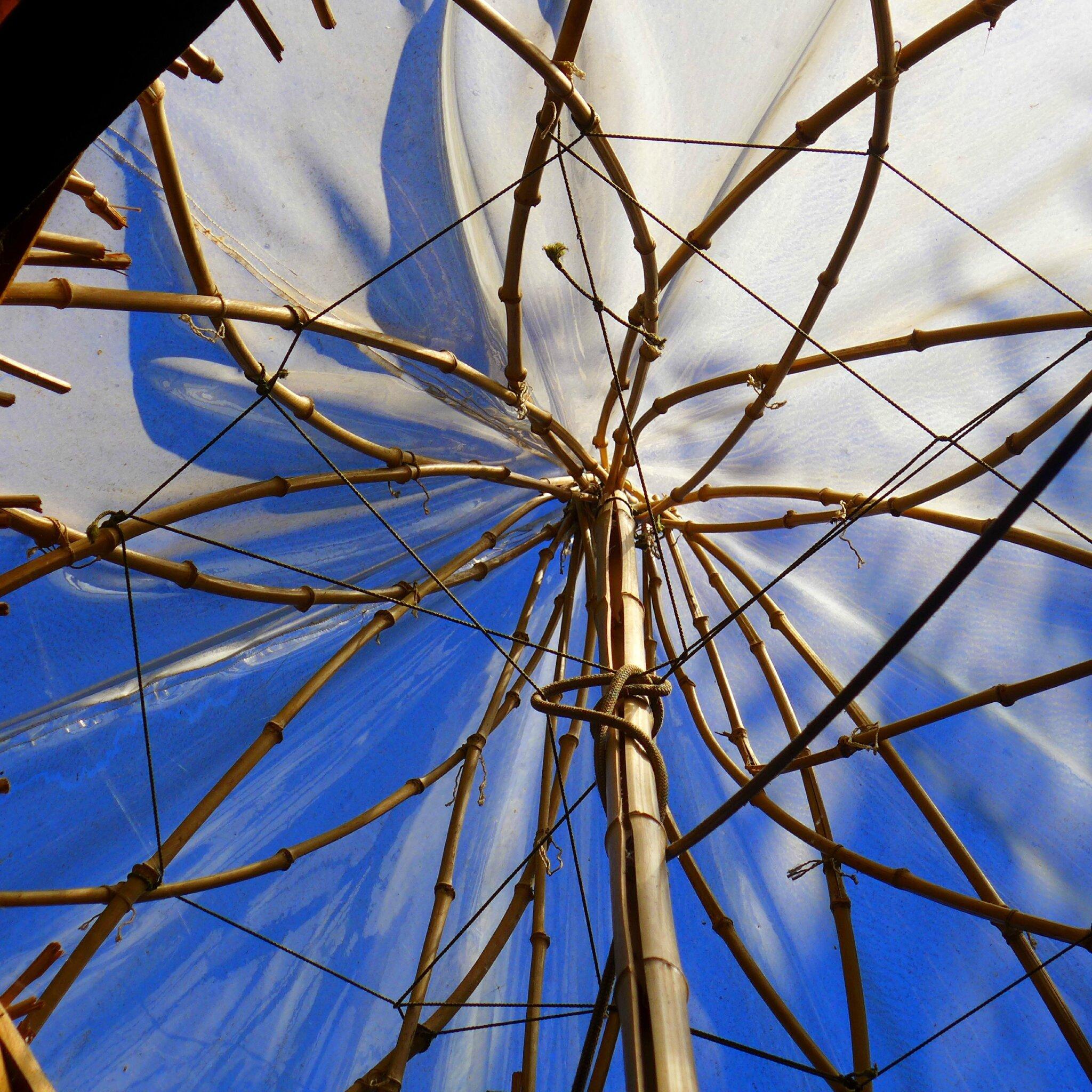 tribu vivace yurtao 87
