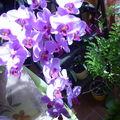 J'ai pris mes orchidées en fleur c'est tellement beau..