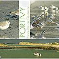 Portivy