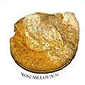 Ammonite f34