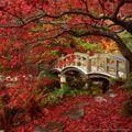jardin japonais bis