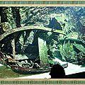 Aquarium d