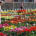 <b>Hortus</b>-Bulborum à Limmen Pays-Bas