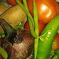 Pommes de terre sautées et haricots verts