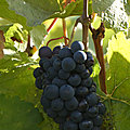 Petit tour en Bourgogne ! entre vignes et patrimoine