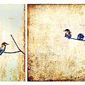 Blog-oiseaux